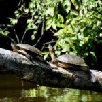 Voyager au Costa Rica : les visites incontournables à San José